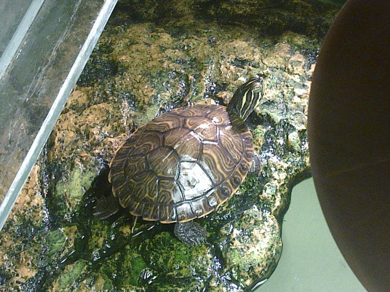 Mon Aquarium & mes Tortues - Page 2 17022035