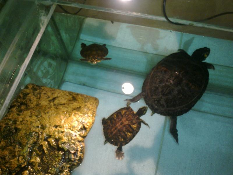 Mon Aquarium & mes Tortues 28012017
