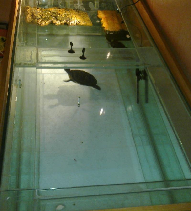 Mon Aquarium & mes Tortues 28012018