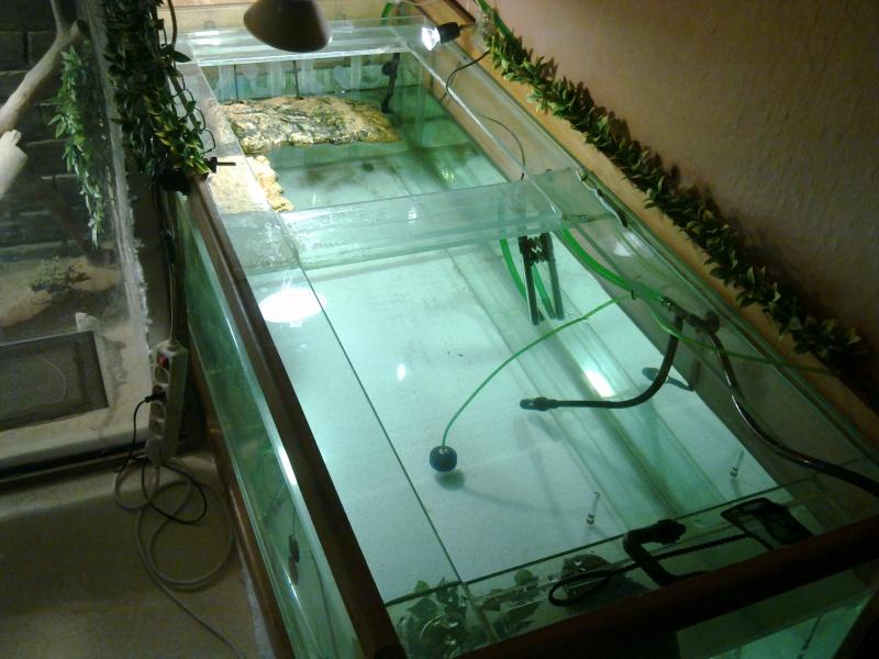Mon Aquarium & mes Tortues 31012013
