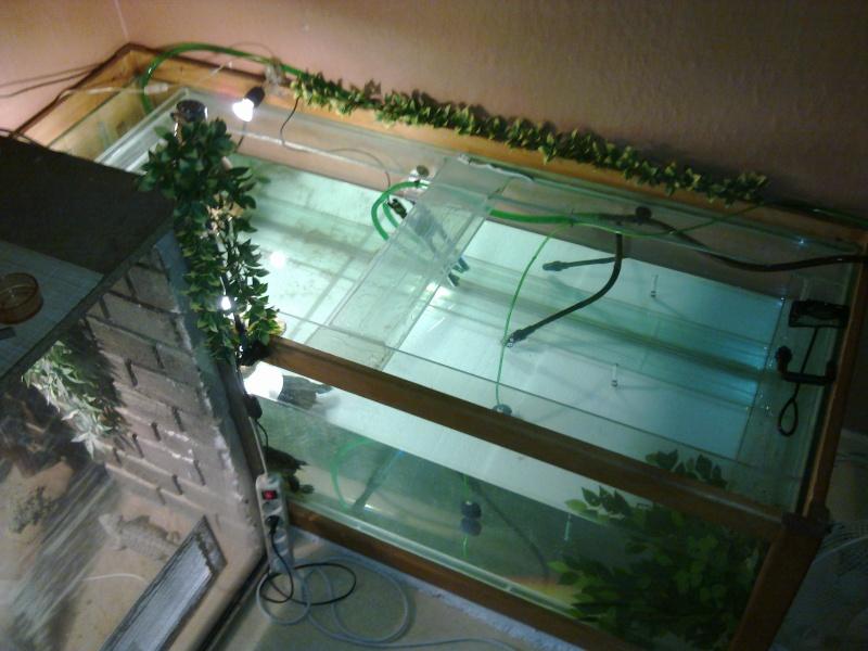Mon Aquarium & mes Tortues 31012014