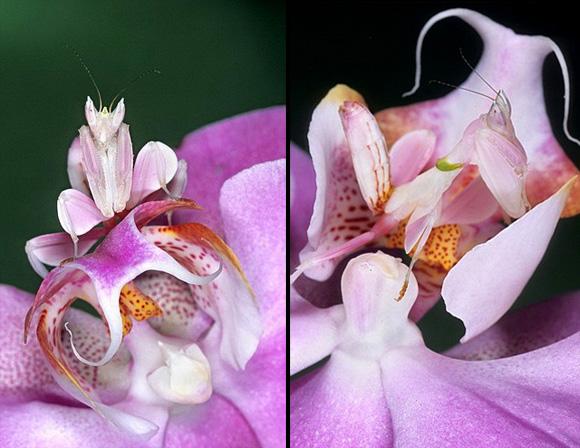 أجمل حشرات العالم  51125510