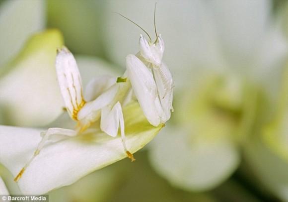أجمل حشرات العالم  Articl11
