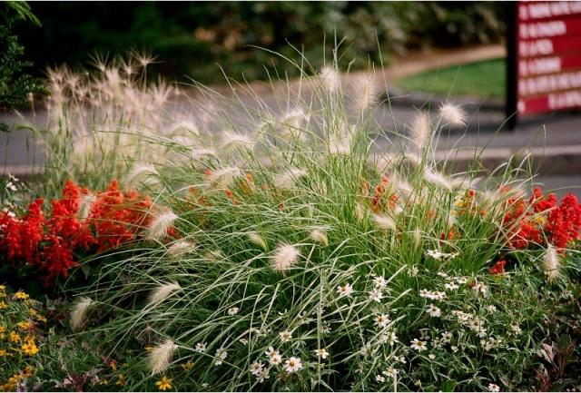 Poaceae (graminées) - Cyperaceae (bambous) Compos10