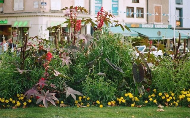 Poaceae (graminées) - Cyperaceae (bambous) Compos11