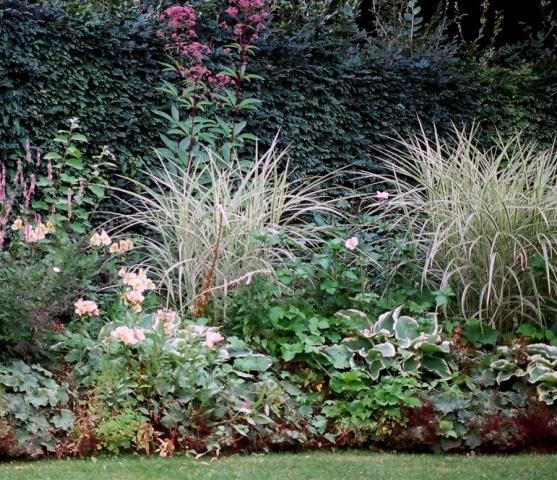Poaceae (graminées) - Cyperaceae (bambous) Laiche12