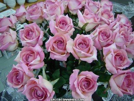 Belles Images 0033711