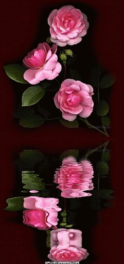 Belles Images 0049211