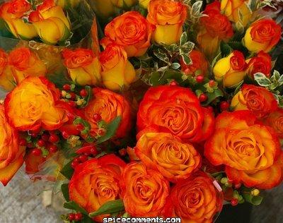 Belles Images 0051811