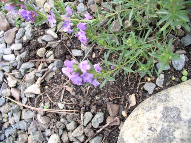 Fleur inconnue Fleur_10