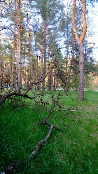 Природа избранное Amnb0911