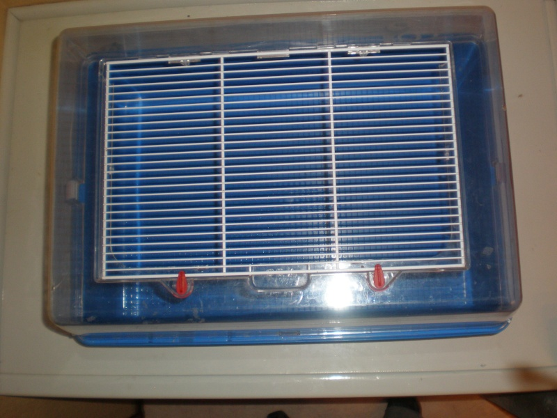 Vends cage plexiglas (59) P2030013