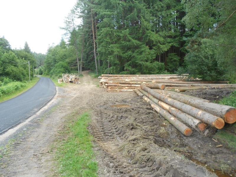 forestiers de roger : cinquieme partie - Page 3 Dscn2210