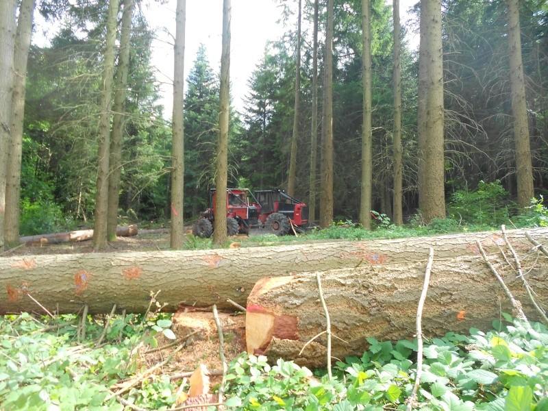 forestiers de roger : cinquieme partie - Page 3 Dscn2218
