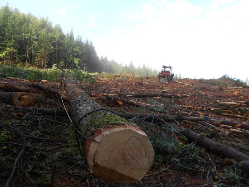 forestiers de roger : cinquieme partie - Page 5 Dscn2312