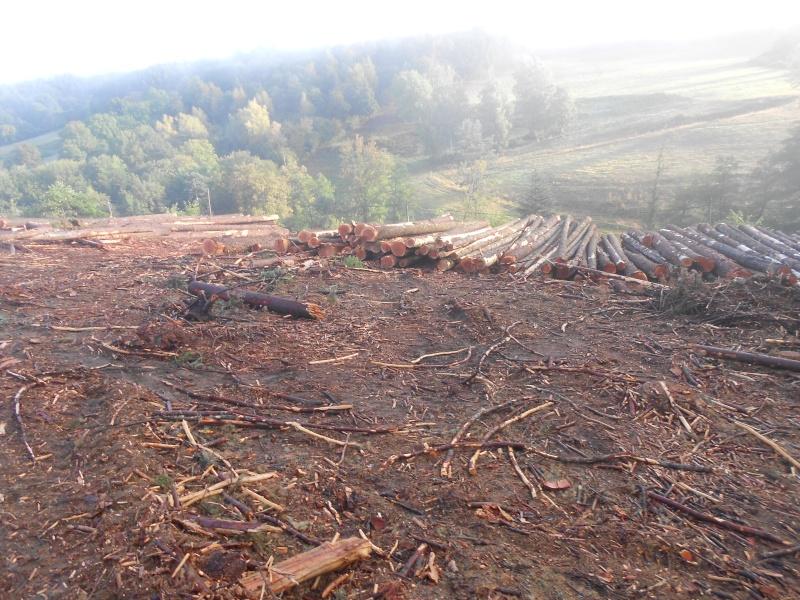 forestiers de roger : cinquieme partie - Page 5 Dscn2313