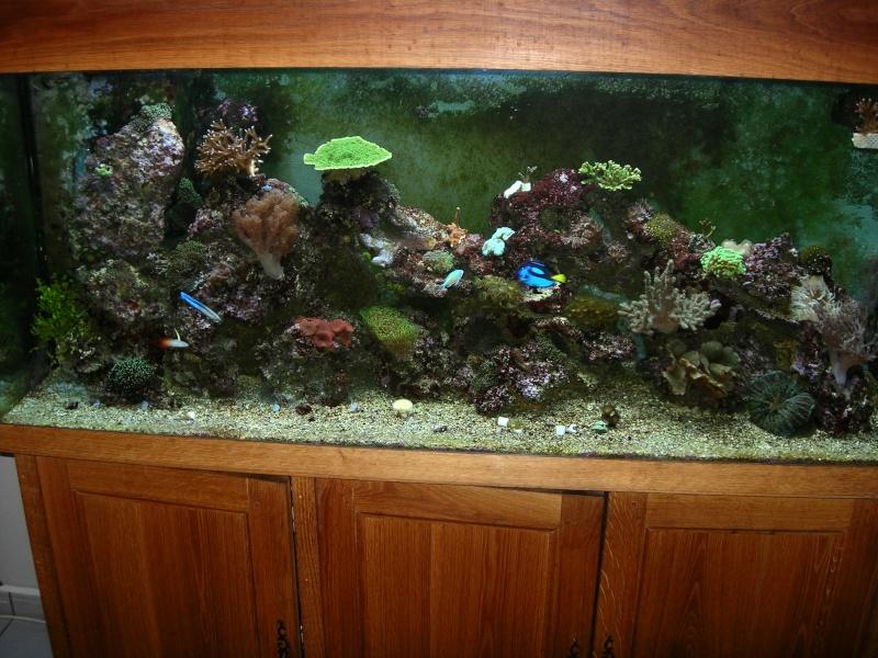 probleme d'algues dans mon recifal Dscn2224