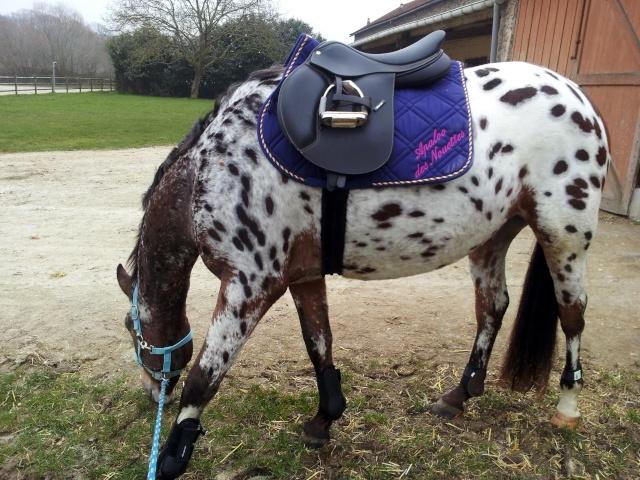 Apaloo des Nouettes, petit poney devient grand! 20130312