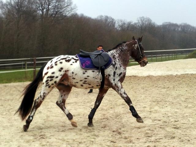 Apaloo des Nouettes, petit poney devient grand! 20130313
