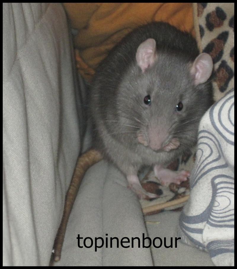 Topinenbour xxxx chapu bébés bleu us  Topin10