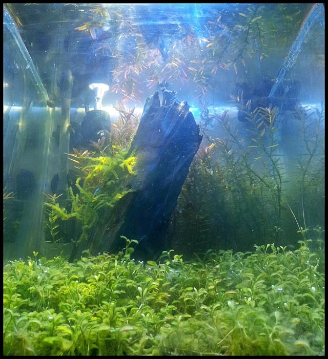 """Nano 20 litres """"such as a jungle"""" 20130213"""