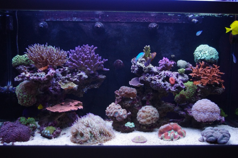 Red Sea Max 500  Imgp4510