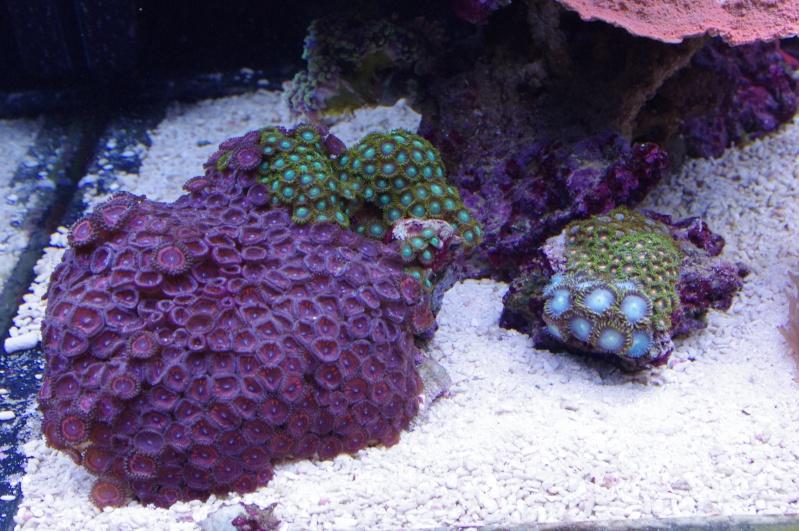 Red Sea Max 500  Imgp4616