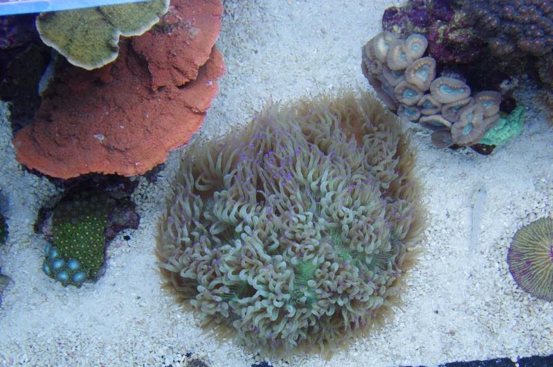 Red Sea Max 500  Imgp4617
