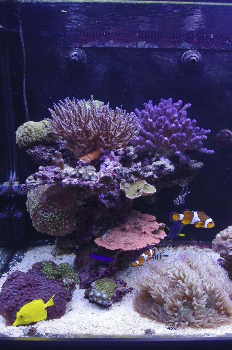 Red Sea Max 500  Imgp4618