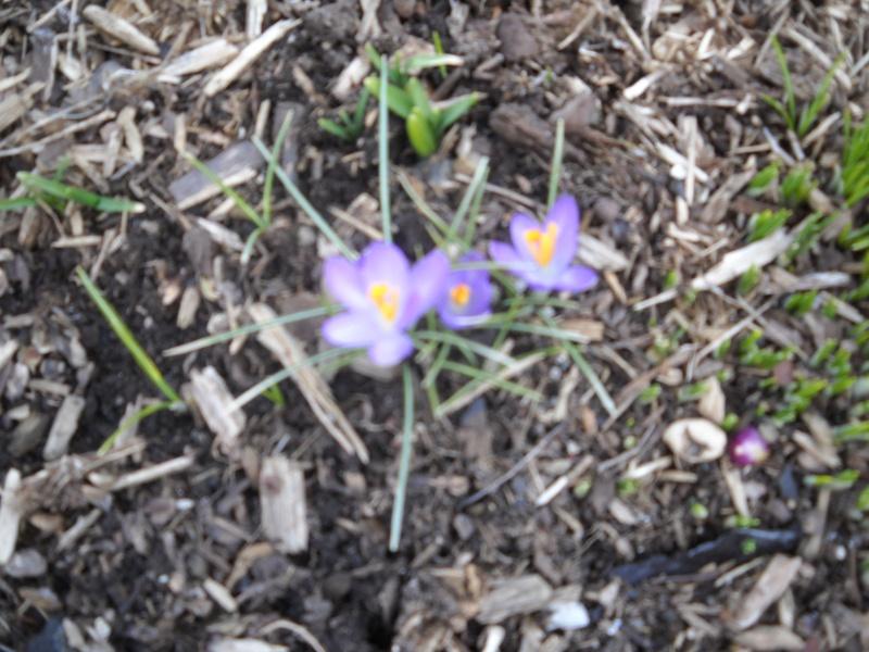 Has Spring Sprung? 2013_g14