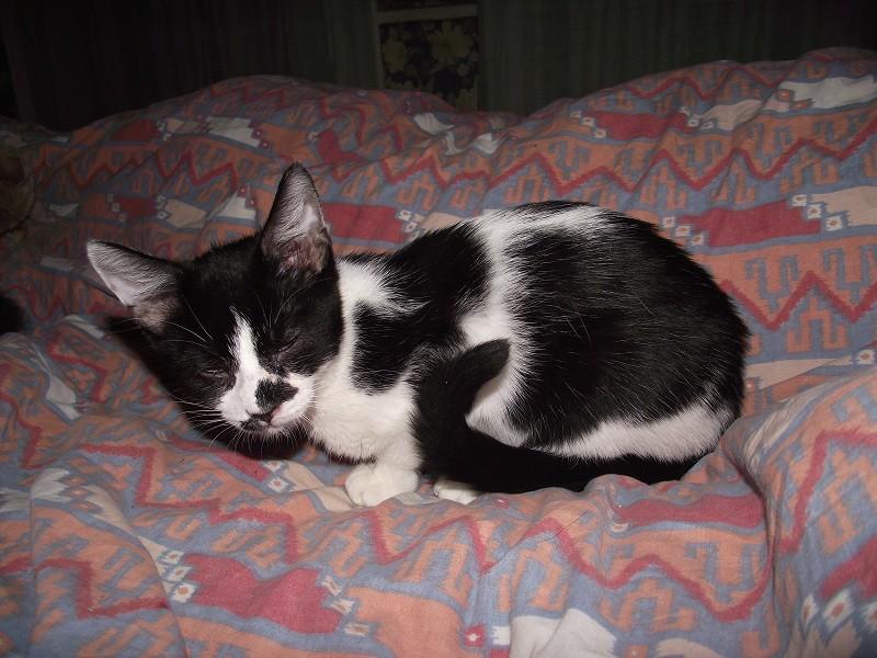 Ptipois, né le 12 septembre 2010, identifié HPB722 Ptipoi11