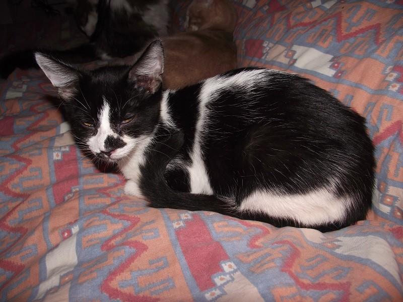 Ptipois, né le 12 septembre 2010, identifié HPB722 Ptipoi12