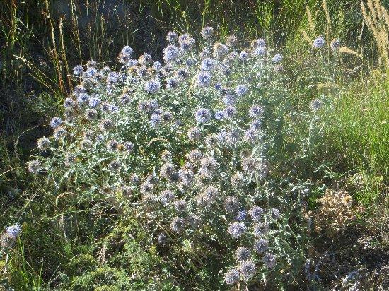 fleurs en septembre dans le Briançonnais (05) Copy_103