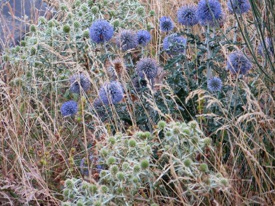 fleurs en septembre dans le Briançonnais (05) Copy_124