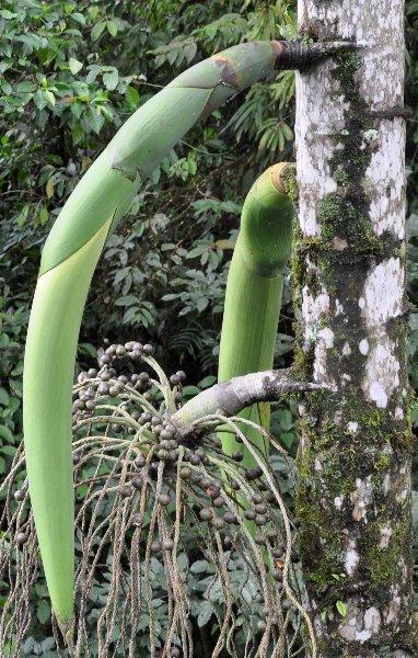 Costa-Rica - Page 2 Copy_o36