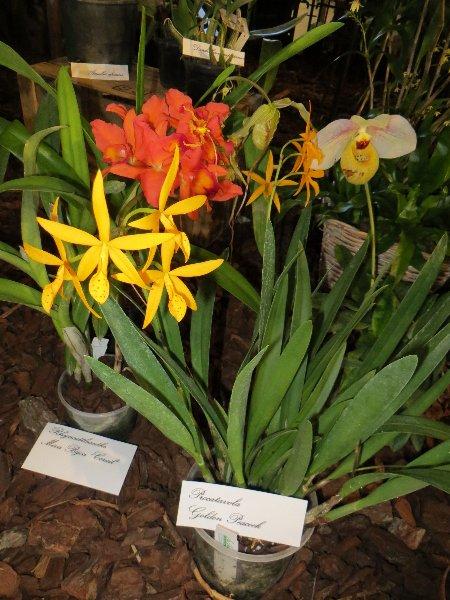 """Exposition d'orchidées tropicales """"botaniques"""" Favrie12"""