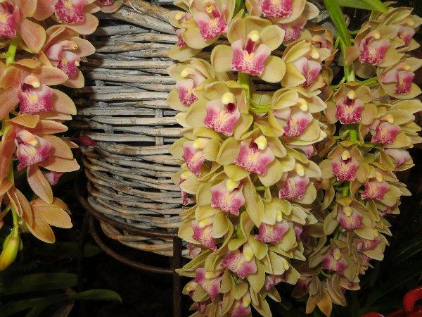 """Exposition d'orchidées tropicales """"botaniques"""" Favrie15"""