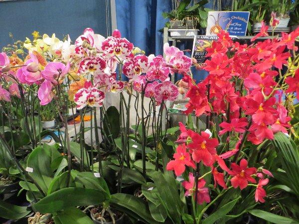 """Exposition d'orchidées tropicales """"botaniques"""" Favrie16"""