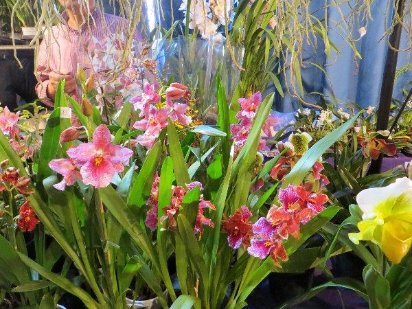 """Exposition d'orchidées tropicales """"botaniques"""" Favrie17"""