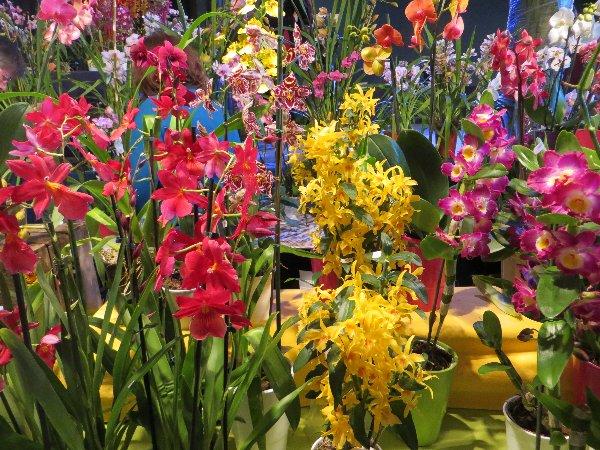 """Exposition d'orchidées tropicales """"botaniques"""" Favrie18"""