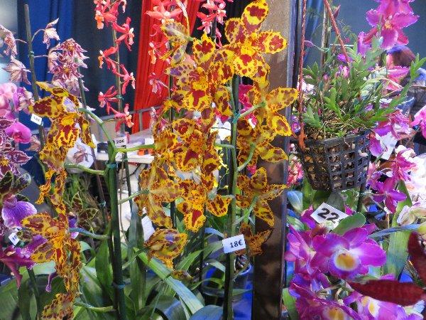 """Exposition d'orchidées tropicales """"botaniques"""" Favrie20"""