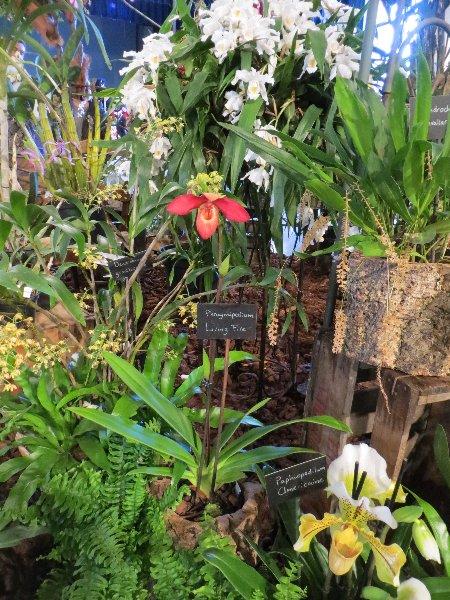 """Exposition d'orchidées tropicales """"botaniques"""" Favrie22"""