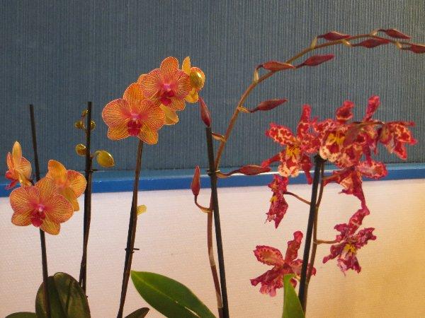 """Exposition d'orchidées tropicales """"botaniques"""" Favrie24"""