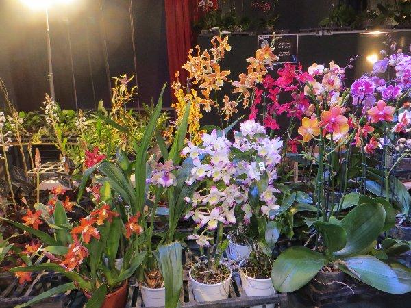 """Exposition d'orchidées tropicales """"botaniques"""" Favrie28"""