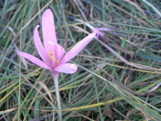 fleurs en septembre dans le Briançonnais (05) Septem36