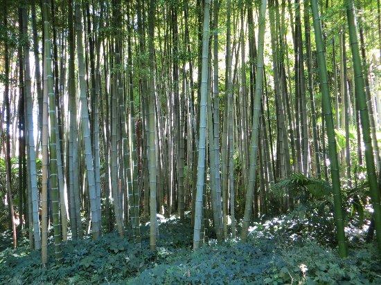 (30) La Bambouseraie d'Anduze Septem52
