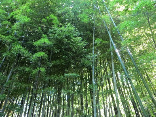 (30) La Bambouseraie d'Anduze Septem53