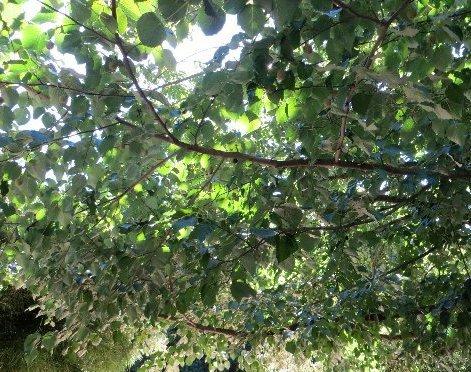 (30) La Bambouseraie d'Anduze Septem73