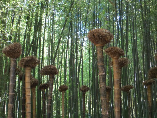 (30) La Bambouseraie d'Anduze Septem75