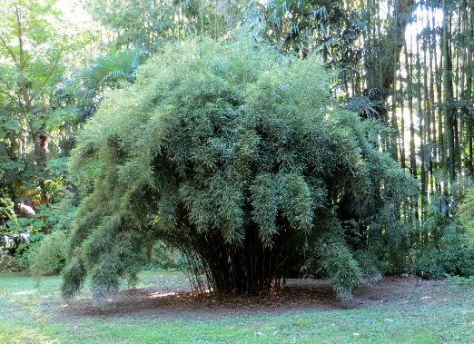 (30) La Bambouseraie d'Anduze Septem84